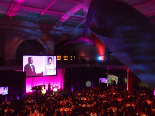 the Gala was held against the fitting larger-than-life backdrop of the whales and dinosaurs at the American Museum of Natural History.   The S.L.E. Lupus Foundation is the country's preeminent organization delivering direct patient services, public education and novel research at a national level. Founded more than 40 years ago in New York City by lupus patients and their families as the first nonprofit to serve the lupus community, it remains the cornerstone of comprehensive care in all five boroughs in the continuous battle for a Life Without Lupus.